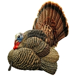 Avian X Strutter Turkey Decoy