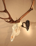 Big Hooker - Large & XL Trophy European Mount