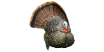 LCD Strutter Tom Decoy
