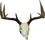 European Skull Antler Mounting Kit